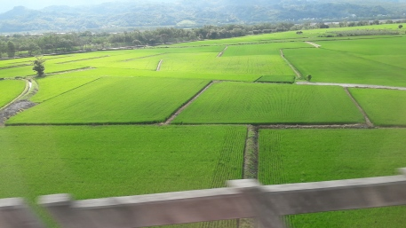 """This island has beautiful countrysides, especially these rice fields here in the south"""